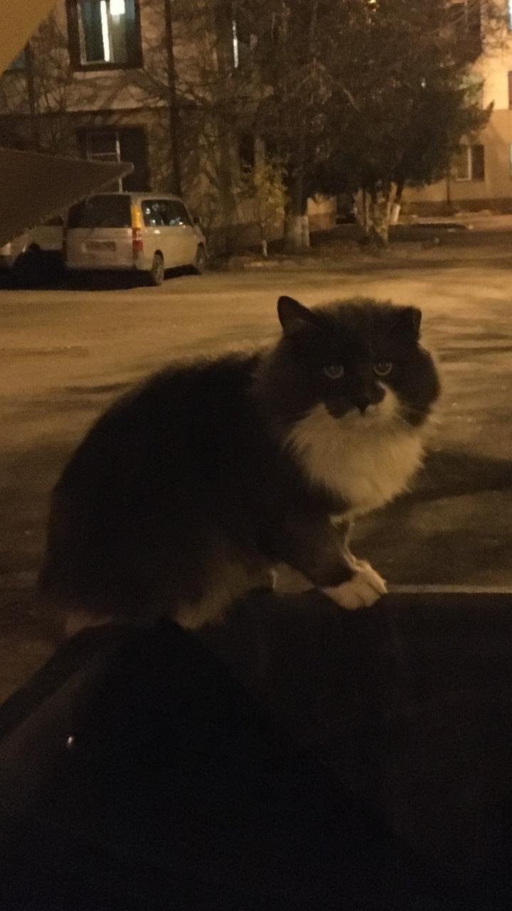 Кто потерял кота на Пионерской 30, корп.