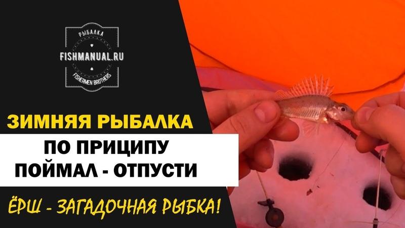 Зимняя рыбалка по принципу Поймал-отпусти. Бешеный клев ерша.