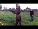 Mi nombre Pavel y este es mi oso. VAYA FAUNA OSO