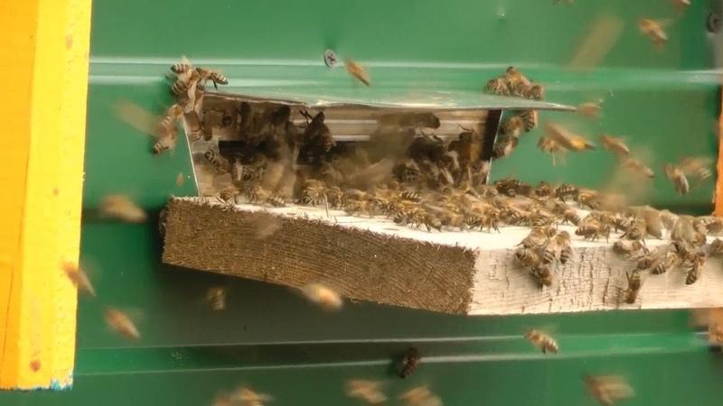 Кто пчелок уважает. (Павильонное содержание пчел)