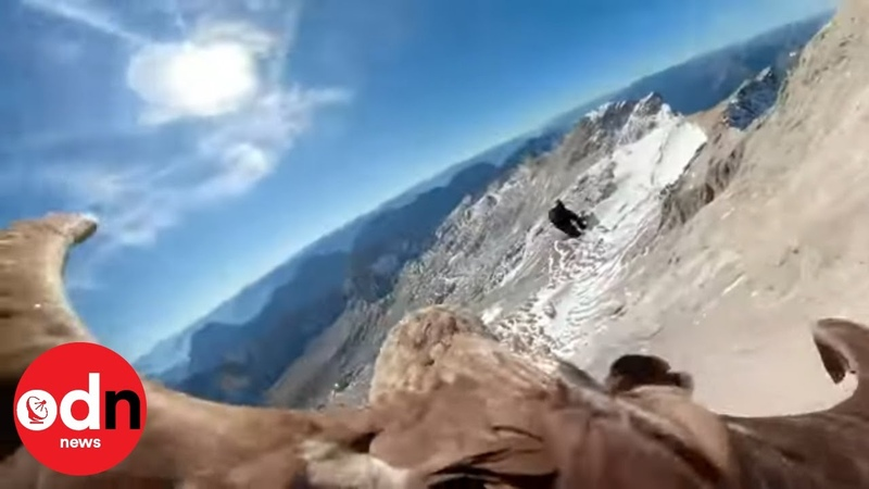 Spectacular Eagle Flight Footage Shows Climate Change Impact on Alps