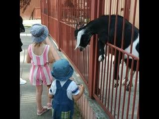 Липецкий зоопарк .