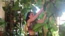 Fiddle Leaf Fig (Ficus lyrata) Care — Plant One On Me — Ep 024