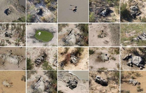 Таинственная гибель более чем 350 слонов в Ботсване