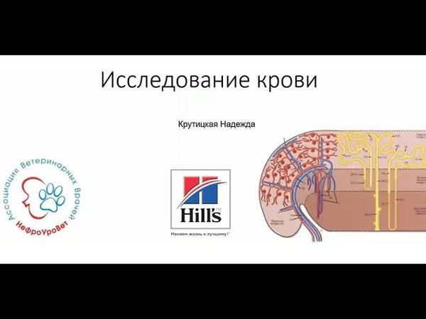 Вебинар №4 школы НЕФРОУРОВЕТ Исследование крови при заболеваниях почек Лектор Надежда Крутицкая