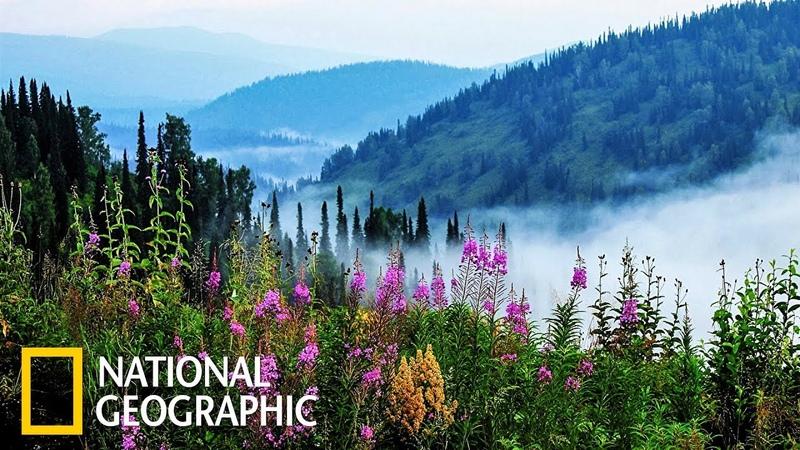 Дикая природа России Сибирь | Фильм 1 из 6 | (National Geographic)