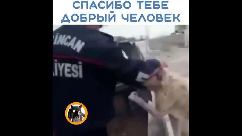 Спасение собакена
