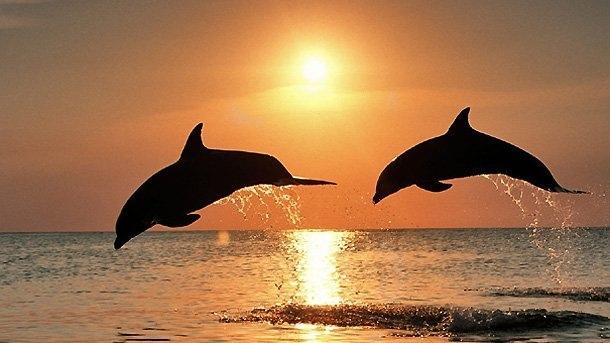 Так ли добры дельфины, изображение №5