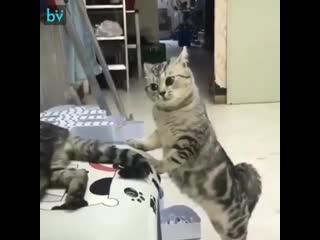 Ты где шлялся