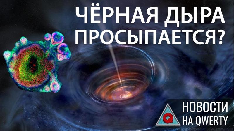 Пробуждение черной дыры в центре Млечного пути и органоиды киборги Главное на QWERTY №96