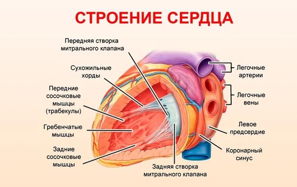 Синдром ДСТ у детей и его влияние на сердечно-сосудистую систему, изображение №2