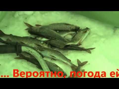 Зимняя рыбалка на таежных озерах Часть 4