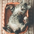 Cat music dreams relaxmycat official pet care collection