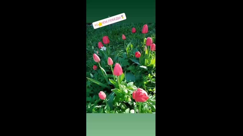 VID_24760318_093456_173.mp4