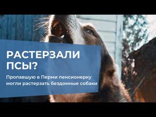 Пропавшую в перми пенсионерку могли растерзать бездомные собаки