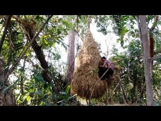 Building the beautiful big bird nest house on the tree