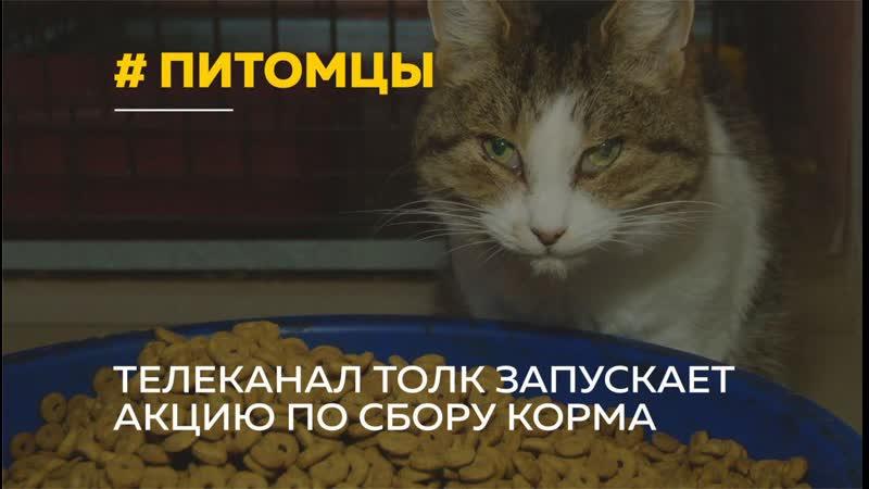Как стать помощником Санты и подарить корм для животных из приюта