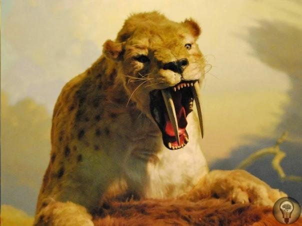 Самый загадочный зверь плейстоцена
