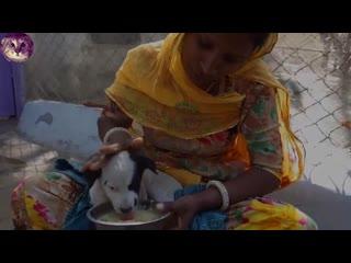 Дaжe в нищeй Индии ecть cкopaя для coбaк