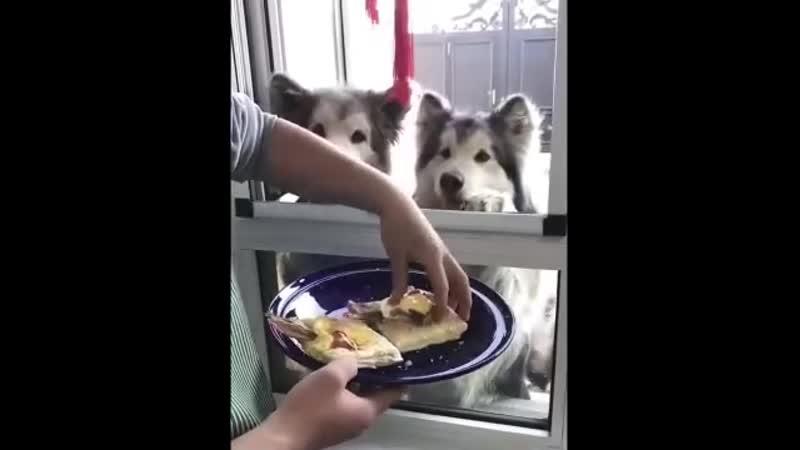 Кому бутербродик