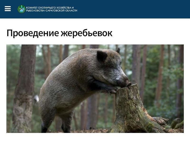 Комитет охотничьего хозяйства и рыболовства Саратовской области начал приём заявок от охотников на участие в жеребьёвке