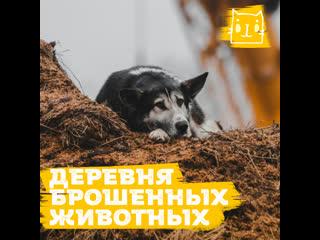 Жители деревни Терехово бросили своих домашних животных умирать в одиночестве