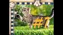 СМЕШНЫЕ КОТЫ Смешное видео, нарезка приколов про котов, кошек и котиков 2021!