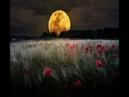 3 часа Пение птиц Звуки природы Ночной лес Расслабление и здоровый сон Nature Sounds