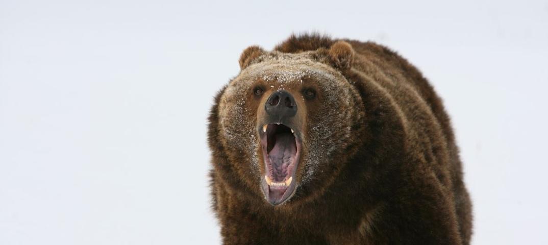 предоставляют фото медведя с бидоном на голове теплоизолирующего слоя зависит