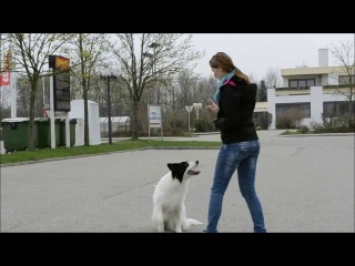 Hunde-Tricks mit Border Collie Yoshi - mydoglife