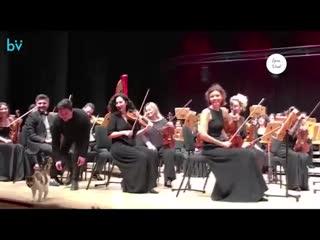 В Стамбуле героем концерта классической музыки стал... кот.