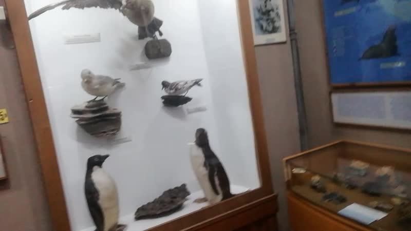 🕍музей Антарктики 🛷Сани английской экспедиции
