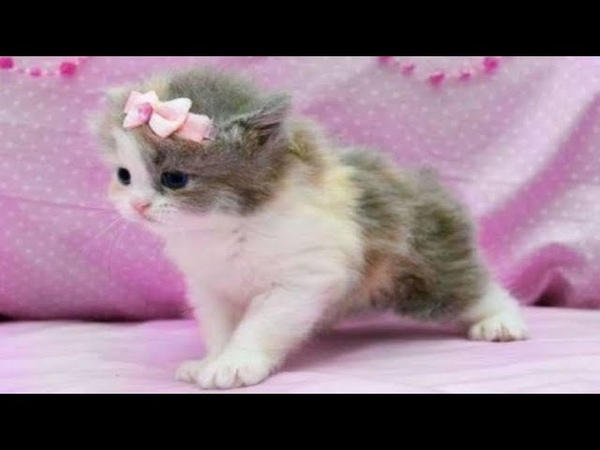 Super cute kittens Worlds most Cute and Funny Kittens Episode 7