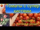 Помидоры Лучшие урожайные сорта томатов с огромными кистями и замечательным вкусом Рекомендую 3 сорт