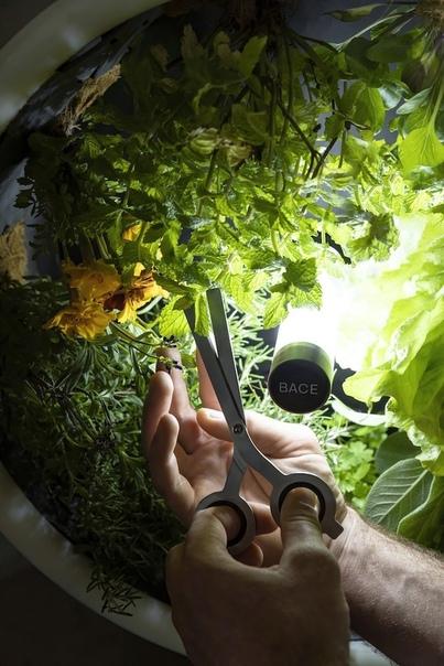 В крытом саду, вдохновленном НАСА, выращивают овощи с помощью технологии невесомости