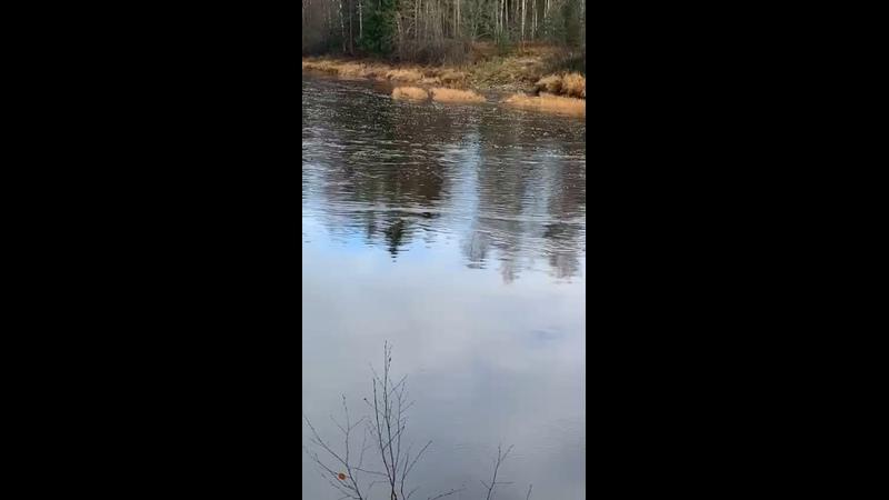Видео от Вероники Никулиной