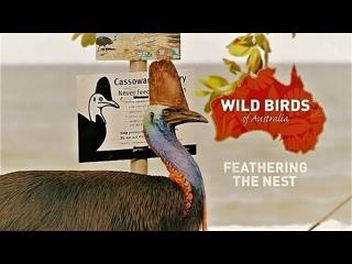 Дикие птицы Австралии: Родное гнездо
