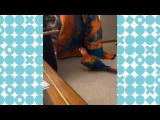 Видео от Видели Видео
