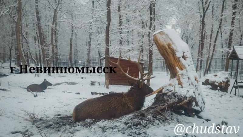 Олени в Фабричном парке. г Невинномысск