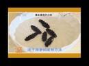 Трепанг Цы Шэнь, или Хай Шэнь, или Морской огурец. Искусственное разведение трепангов. Методика сбора и переработки.