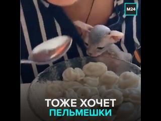Котенок пытается украсть пельмень — Москва 24
