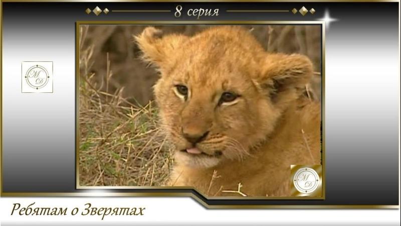 BBC Ребятам о зверятах 8 серия BBC All about animals 08