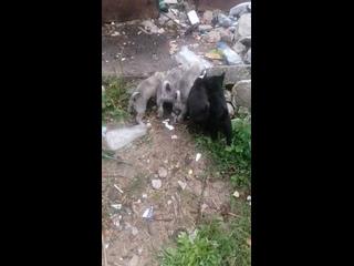 Video by Борисов. Животные в беде! Поможем вместе!