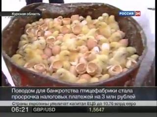 В Курской области на местной птицефабрике уничтожают тысячи цыплят и кур