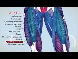 Анатомия._Экскурс_по_основным_мышцам_человека._(720p)