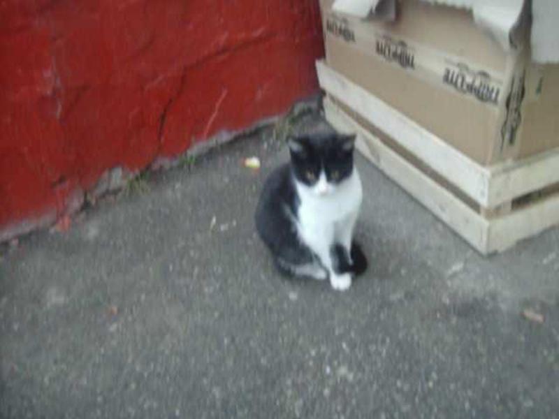 черно белый котёнок