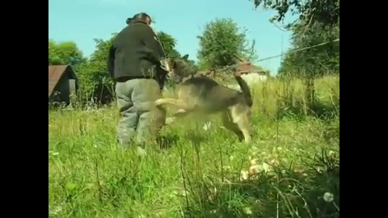 Hunde für den Selbst - Herden und Grundstückschutz ausbilden