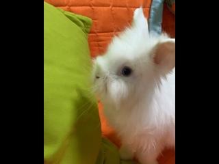 """Видео от Зоогостиница """"КОТотель62"""" - отель для кошек"""
