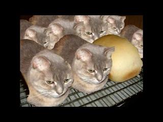 Вы_наверное_подумали,_что_я_кот