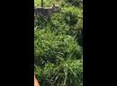 Видео от Жанны Кокориной